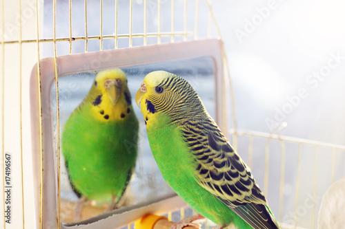 Aluminium Papegaai A parrot. A wavy parrot in green color.