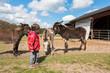 Kid approaching donkeys