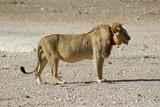 Safari en Namibie - 174241735