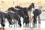 Safari en Namibie - 174241919