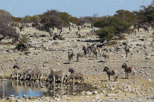 Safari en Namibie