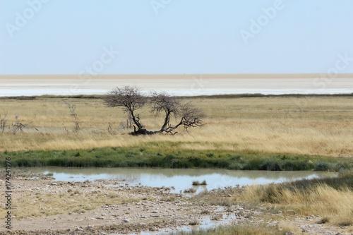 Papiers peints Bleu ciel Safari en Namibie
