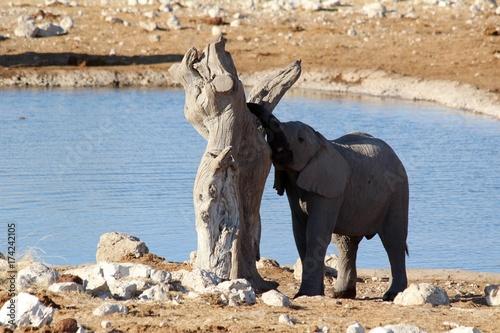 Fotobehang Neushoorn Safari en Namibie