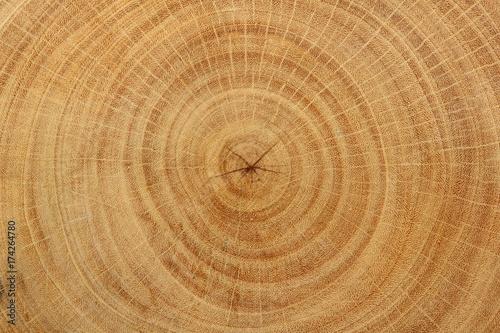 Fototapeta Close-up wood grain of tree stump