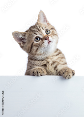 Fotobehang Kat Funny cat kitten peeking out of a blank cardboard, isolated on white background