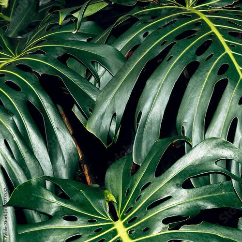 Tropikalne palmy. Minimalistyczny styl do wydruków