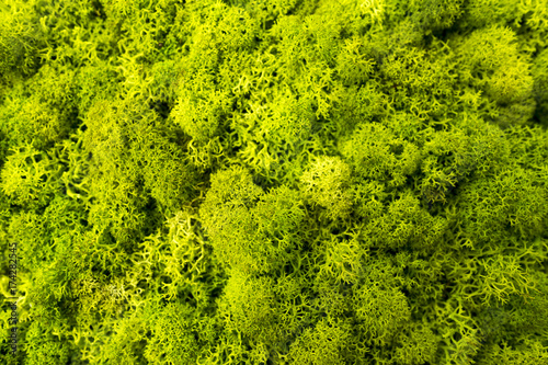 Poster Water planten Grünes frisches Moos