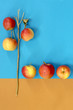 Abstract still life with apples on a colorful background - 174283143