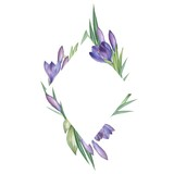 Crocus 4. Watercolor Floral frame. Watercolor illustration. Hand-drawing. Isolated on white - 174285557