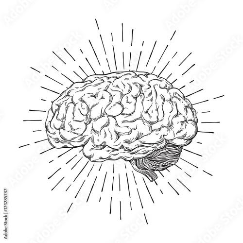 Hand drawn human brain with sunburst anatomically correct