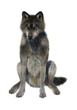 3D Rendering Gray Wolf on White - 174290734