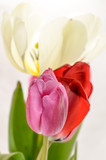 Side View Tulips