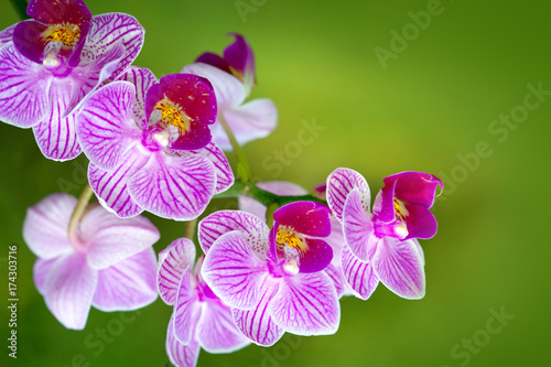 pink-orchid-with-water-drops-isolated