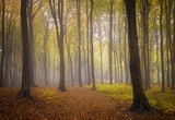 autumn forest background with vivid foliage