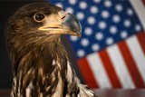 America. - 174310730