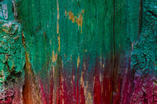 Green-red woody background. Test of wood with bark. Two-colored wooden background. Horizontally divided background. - 174311597