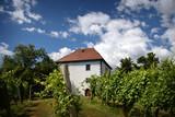 House among the vineyards in summer. Slovenske Konjice, Slovenia - 174319722
