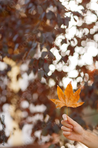 Yellow leaf in hand against of autumn leaves background.