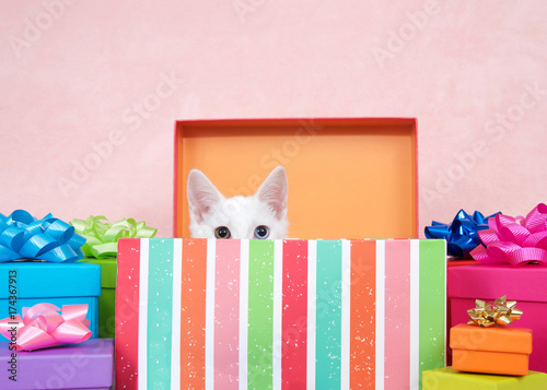 White kitten with heterochromia eyes, one blue one yellow green crouched down in a striped colorful birthday present box with bright presents festive bows surrounding. Pink background.