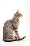猫の素材 - 174387131