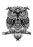 Owl illustration to paint. Draw for relaxing