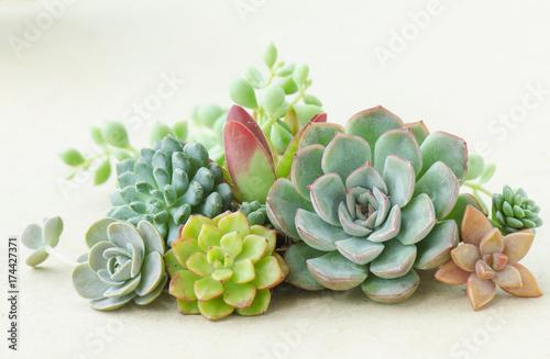 Kolorowy kwiatonośny soczysty roślina bukiet