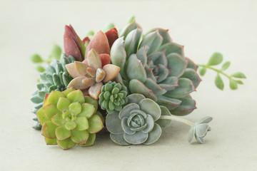 Colorful flowering succulent plants bouquet