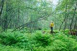 Alone tourist in lush norvegian forest - 174428972