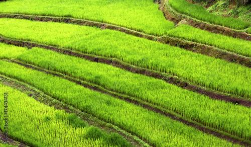 Fotobehang Rijstvelden beautiful landscape view of rice terraces in mae hong son, thailand.