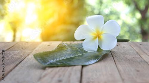 Fotobehang Plumeria flower frangipani on wood background