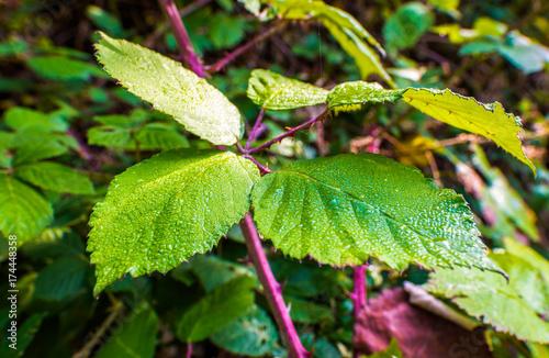 Blatt Blätter Wald