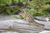 Cute squirrel walking around - 174450129