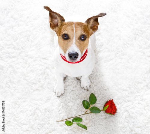 Keuken foto achterwand Crazy dog happy valentines dog