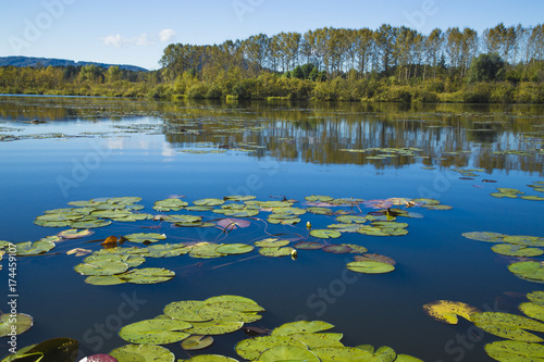 Foto op Canvas Bergen Calm water of a mountain lake on a quiet, sunny autumn day. Water lilies on a smooth surface.
