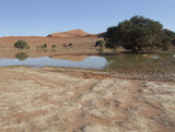 Wasserstelle mit Sanddüne im Sossusvlei, Namibia - 174460126