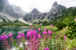 Violet flowers in High Tatras, Slovakia