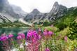 Violet flowers in High Tatras, Slovakia