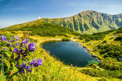 Violet flowers in West Tatras, Slovakia