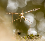 a large mosquito by the river in the nature - 174469501