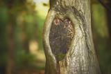 Heart shape in the bark - 174471346