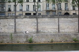 Fototapety パリ、セーヌ川