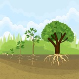 Sequential stages of growth of plant from seed to tree. Plant growth stage - 174510767