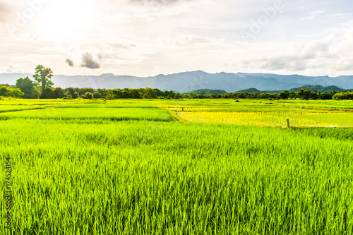 Papiers peints Vert chaux Beautiful rice fields over the mountain range.Rice field green grass blue sky cloud cloudy landscape background at sunset,Green rice field at sunrise.