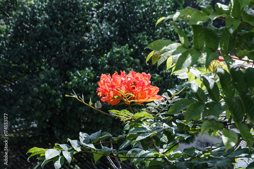 Papiers peints Nature red flower