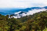 The Ecuadorian rainforest