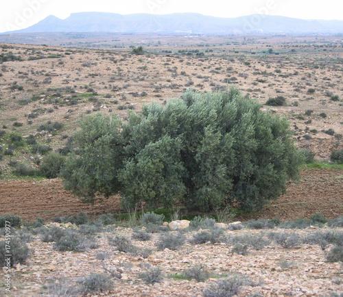 Tuinposter Khaki Landscape Mednine, Tunisia