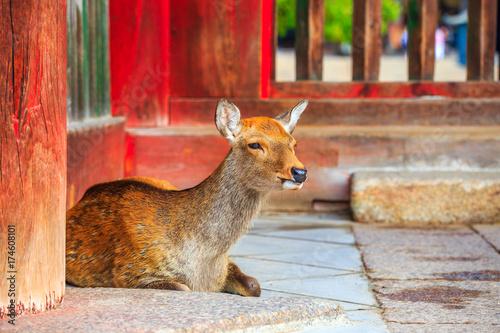 Staande foto Baksteen 奈良の鹿