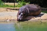 水辺で休むカバ - 174670980