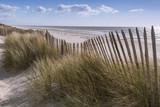 Les dunes du Marquenterre à Fort-Mahon.  - 174674756