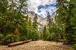 stunning landscape of yosemite forest, california
